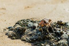 Hermit crab. A close up look of a hermit crab standing on surface of rock on the beach stock images