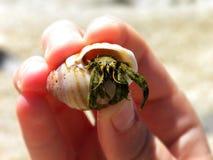 Hermit Crab 2 Stock Image