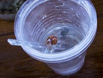 Hermit crab comes out of a cup Stock Images