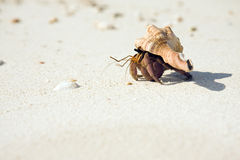 Hermit Crab Crawling On Beach Royalty Free Stock Photos