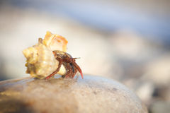 Hermit crab crawling on the beach gravels. Nice little Hermit crab crawling on the beach gravels Royalty Free Stock Photos