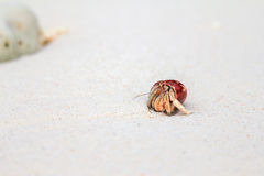 Hermit crab Royalty Free Stock Photos