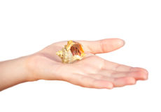 Hermit crab crawling on hand Royalty Free Stock Images