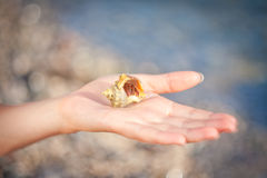 Hermit crab crawling on hand Royalty Free Stock Photos
