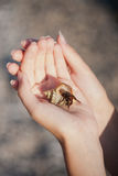 Hermit crab crawling on hand. Nice little Hermit crab crawling on hand Stock Image