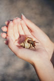 Hermit crab crawling on hand Royalty Free Stock Photography