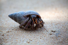 A  hermit crab crawls in the sand of the beach Royalty Free Stock Photography