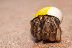 Hermit crab Stock Images