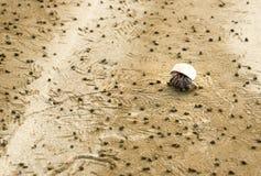Hermit crab and detritus balls on beach. In Bako National Park, Sarawak. Borneo. Malaysia. Selective focus Royalty Free Stock Photography
