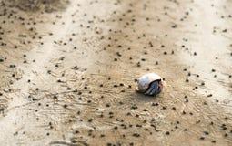 Hermit crab and detritus balls on beach. In Bako National Park, Sarawak. Borneo. Malaysia. Selective focus Stock Image