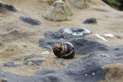 Hermit crab Stock Photos