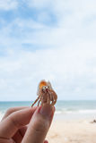 Hermit crab in hand on the beach. Royalty Free Stock Photos