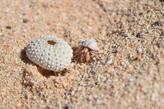 Hermit Crab Heaven Royalty Free Stock Photography