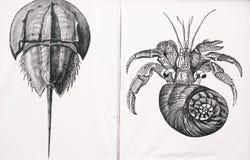 Hermit crab and Horseshoe crab illustration royalty free stock photo