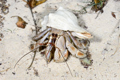 Hermit crab, ifaty Stock Photography