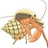 Hermit Crab Illustration. A vector illustration of a hermit crab royalty free illustration
