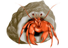 Hermit crab isolated Royalty Free Stock Photo