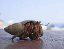 Hermit crab in Mirissa, Sri Lanka Stock Photos