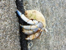 Hermit Crab, Onna, Okinawa. Hermit Crab on the beach in Onna, Okinawa Prefecture Royalty Free Stock Photo