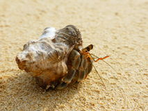 Hermit Crab, Onna, Okinawa. Hermit Crab on the beach in Onna, Okinawa Prefecture Stock Images