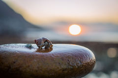 Hermit crab. On rock at sunset royalty free stock photography