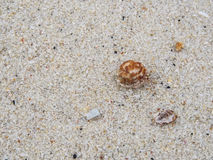 Hermit crab and sand. Background in island Stock Image