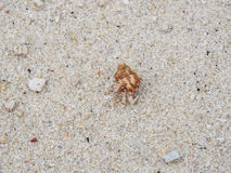 Hermit crab and sand. Background in island Royalty Free Stock Images
