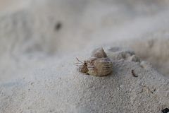 Hermit crab on the sand beach. royalty free stock images