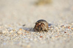 Hermit crab on sand beach, Phuket, Thailand Royalty Free Stock Images