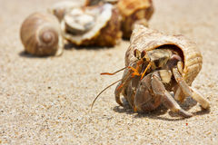 Hermit crab in the sand Royalty Free Stock Images
