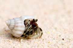 Hermit crab on a sandy beach Stock Photos