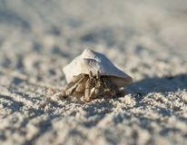 Hermit crab on a sandy beach Royalty Free Stock Photos