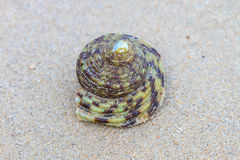 Hermit Crab in a screw shell Royalty Free Stock Photos