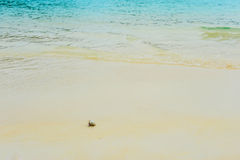 Hermit Crab on sea sunny beaches Stock Image
