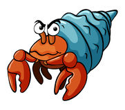 Hermit crab with serious face Stock Photos