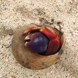Hermit crab in shell on beach shy alone grumpy solitude Stock Photos