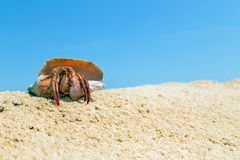 Hermit crab in the shell on a sand beach Stock Photography