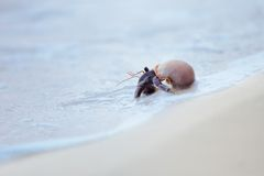 Hermit crab in shell on a seaside Royalty Free Stock Images