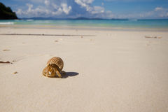 Hermit Crab on the Siam Bay. Racha island , Phuket THAILAND Stock Photography