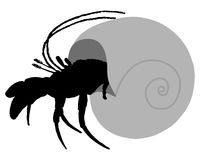 Hermit crab silhouette Stock Photos