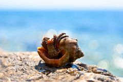 Hermit crab on a stone Royalty Free Stock Image