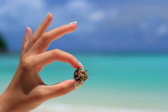 Hermit Crab,Surin Island,Phan Nga,Thailand Royalty Free Stock Photos
