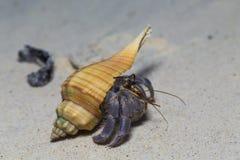 Hermit Crab at Surin island in Thailand Stock Photos