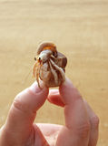 Hermit crab in Thailand Stock Photo