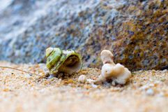 Hermit Crab on a beach Stock Photography