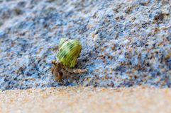 Hermit Crab on a beach Stock Image