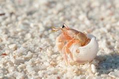 Hermit Crab Stock Photography