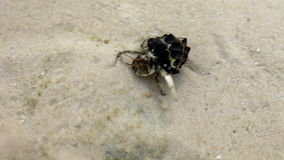 Hermit crab walk on a beach Royalty Free Stock Image