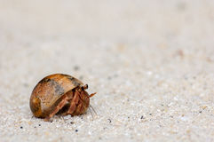 Hermit crab walking on the beach at Surin island Royalty Free Stock Photos