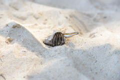 Hermit Crab walking on beach Stock Photos
